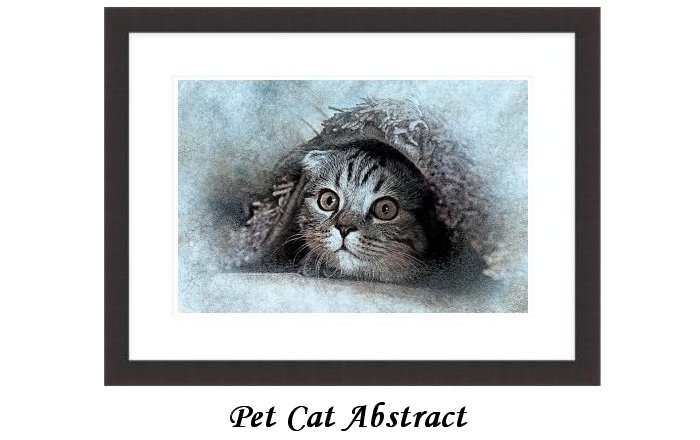 Pet Cat Abstract