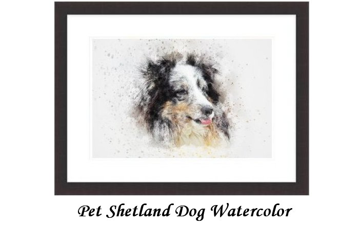 Pet Shetland Dog Watercolor