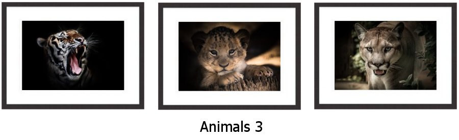 Animals 3 Framed Prints