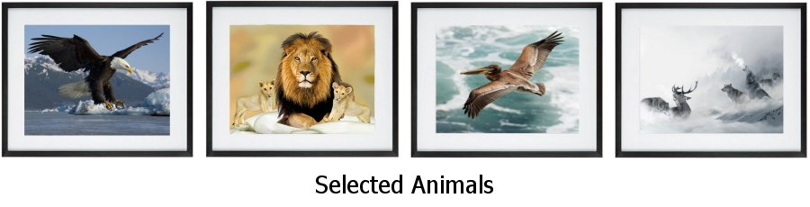 Selected Animal Framed Prints