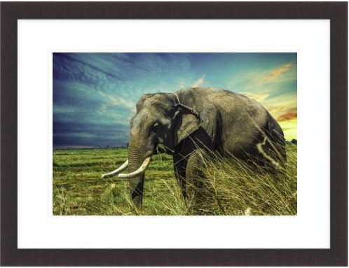 A Great Elephant Picture