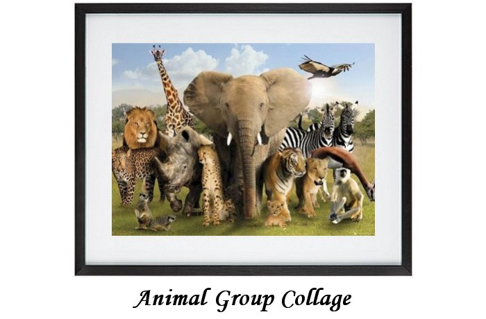 Animal Group Collage