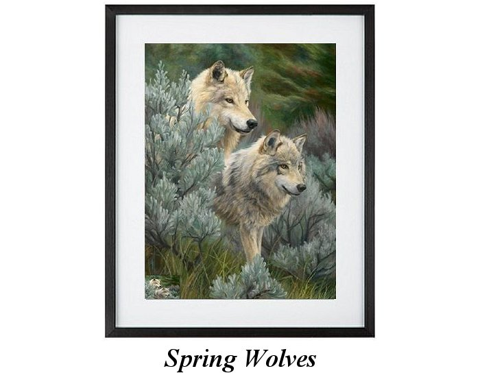 North American Wolves In Spring