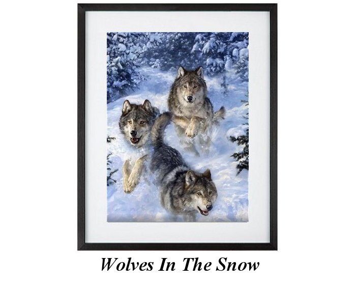 North American Wolves In Snow