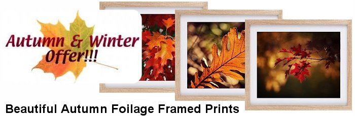 Autumn Foilage Prints