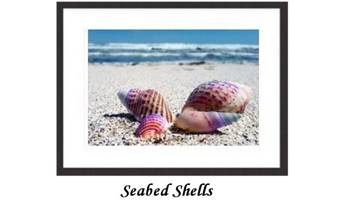 Seabed Shells