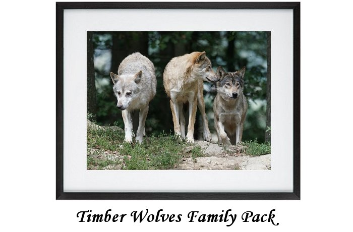 Timber Wolves Family Pack