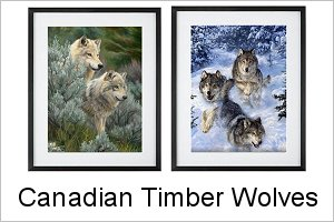 Canadian Timber Wolves Framed Prints