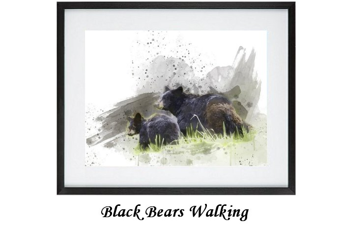 Black Bears Walking