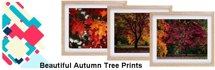 Autum Trees Framed Prints
