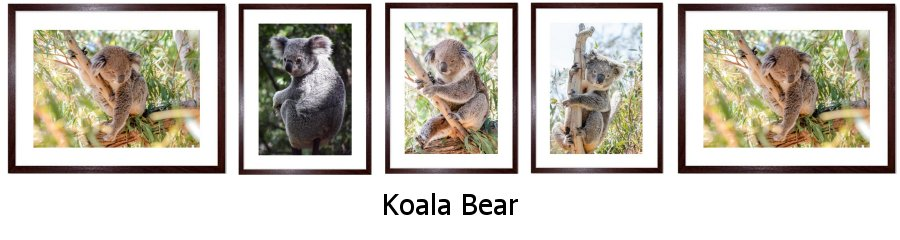 Koala Bear Framed Prints