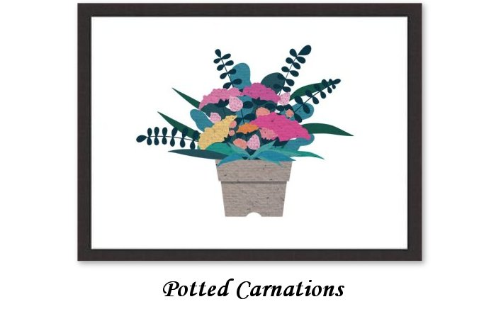 Potted Carnations