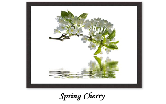 Spring Cherry Branches Branch Flowers Nature