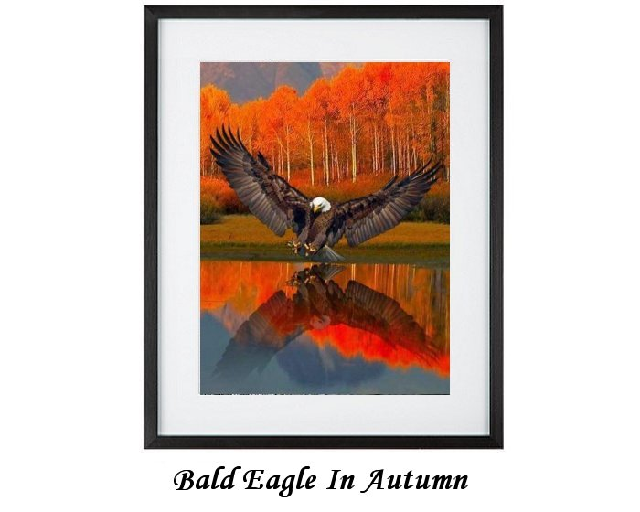 Bald Eagle In Autumn