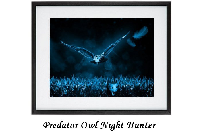 Predator Owl Night Hunter Print