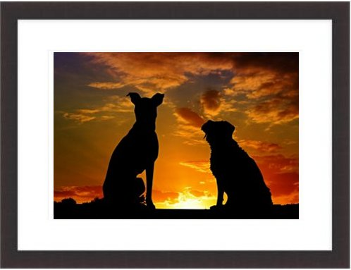 Dogs Animals Sunset Friends Friendship Affection